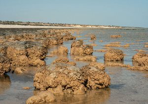 Stromatolites of Hamelin Pool. Photo Jiri Lochman/Lochman Transparencies.